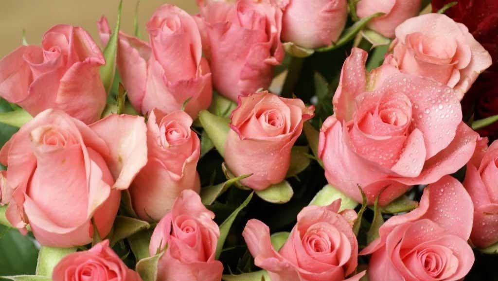 بوی کدام گلها شما را شاد می کند؟