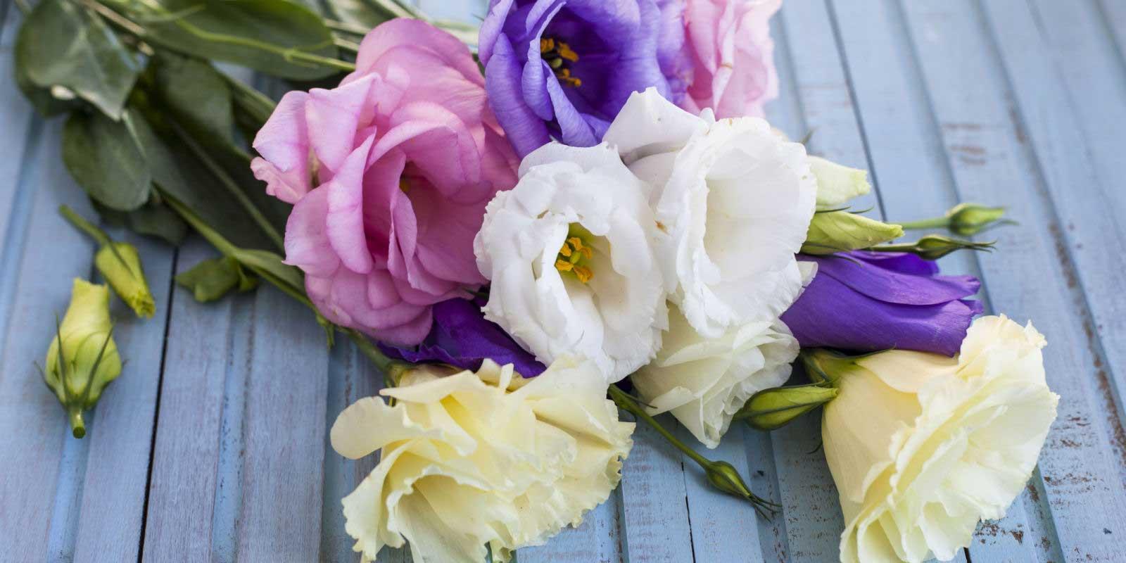 چگونه عمر گل های شاخه بریده را افزایش دهیم؟