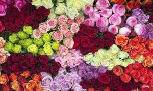 معنی انواع رنگ گل های رز