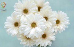 30 نوع از انواع گل های سفید