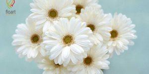 ۳۰ نوع از انواع گل های سفید