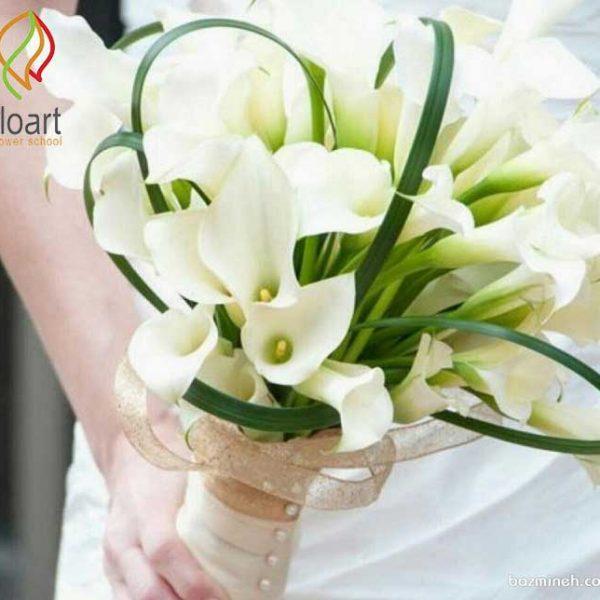 گل نیلوفر کلا سفید یا زانتدسچیا