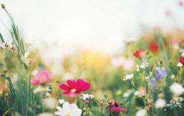 20 حقیقت باور نکردنی درباره گل ها