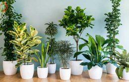 دانستنی های مهم برای نگهداری گل آپارتمانی