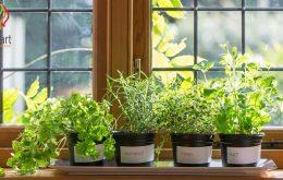 تصفیه هوای خانه با استفاده از گل و گیاهان آپارتمانی