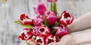 همه چیز درباره گل لاله