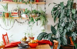 معرفی 11 گیاه آپارتمانی تصفیه کننده هوای خانه