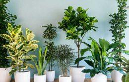 معرفی و آشنایی با 12 گیاه مناسب آپارتمان