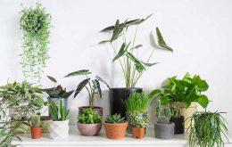 معرفی 20 گیاه برای همه شخصیت ها (شخصیت شناسی گیاهان)