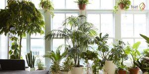 ایده های طلائی برای چیدمان گیاهان در منزل