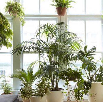 ایده-های-طلائی-برای-چیدمان-گیاهان-در-منزل