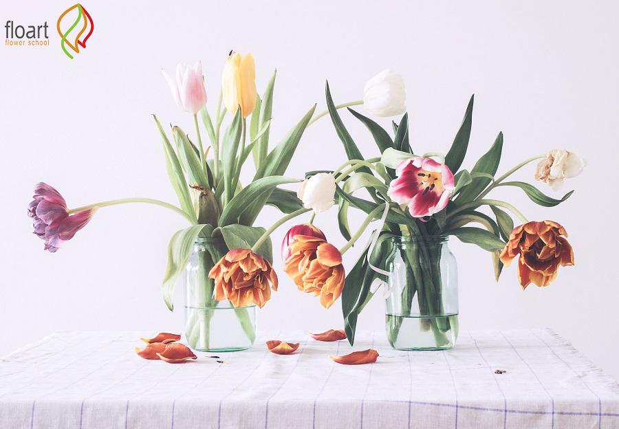 تاثیر گل و گیاه در خانه